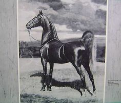 George Ford Morris Saddlebred Horse Bourbon King Old Book Page Print