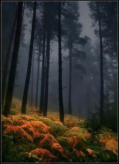 bella102:  random-brilliance:  Mystical!  Via lori-rocks:  Foggy Autumn by taurus13