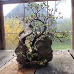<ESTAÇÃO DAS FLORES> MEU BONSAI | um bonsai pode ser sua chance de ter uma…