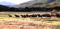 El misterio de los caballos patagónicos: ¿Cómo llegaron al sur del mundo? | Patagonia http://www.guioteca.com/patagonia/el-misterio-de-los-caballos-patagonicos-como-llegaron-al-sur-del-mundo/