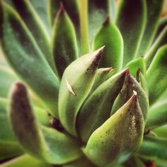 Succulent gardens are a hot item in our shop lately.  #succulent