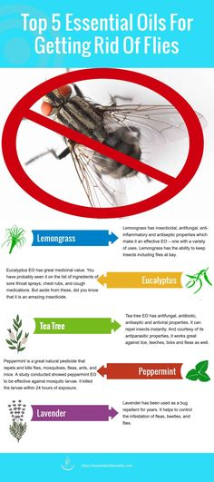 Essential Oils To Get Rid Of Flies – How To Stop These Pesky Space Invaders! Essential Oils To Get Rid Of Flies – How To Stop These Pesky Space Invaders!