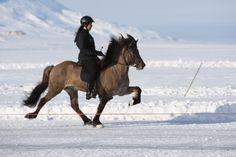 Tolt on an Icelandic Horse #Iceland#ScanAdventures Definitely on my bucket list :)