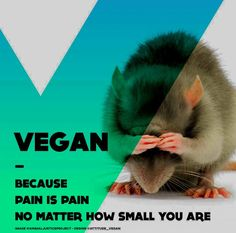 not vegan due to dietary restrictions but I support treating animals humanely, even in my food purchases. To not care borders on phycosis to me. Vegan Facts, Vegan Memes, Vegan Quotes, Why Vegan, Vegan Vegetarian, Vegan Food, Reasons To Be Vegan, Stop Animal Cruelty, Animal Testing