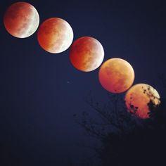 Blood moon - shot by Chip Hunn