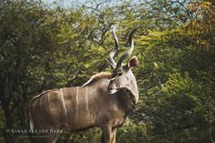 Look deep into nature and then you will understand everything better.  #bushlife #gameviewing #wildlifephotography #wildlifephoto #wildlife #natural #naturephotography #naturepics #natgeophotos #natgeo #natgeoyourshot #wildlifepics #wildlifeshots #canon_photo #canonphotography #photobug #photographer #photography #wildlifephotographer #thisissouthafrica #southafricaza #instagramza #instagramsa #pixel_panda #loves_southafrica #weenengamereserve #weenen #kudu