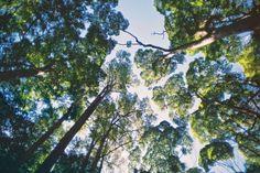 World Explorer by Nicola Abraham Fraser Island, Tasmania, My Photos, Sky, Explore, Adventure, Landscape, World, Nature
