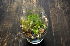 Greener Succulent Terrarium by definitelyjess, via Flickr