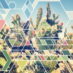 Fresh From The Dairy: Cactus // the marriage of art (especially geometric!) and nature (especially SoCal!), so awesome.
