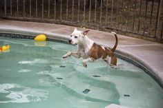 """It's all about our Pets"": Swimming Pool Safety Covers For Dogs"