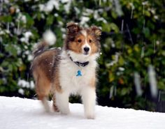 Charlie is three months old and enjoying his first snow in Mississippi.  Goodness, Dew and Laird! Snow in Mississippi!  Picture by Laird Bagnall.