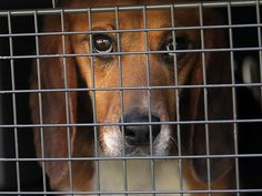 Stop beagles being bred for torture http://www.thepetitionsite.com/471/427/050/stop-the-beagle-puppy-animal-testing-farm/… … Please sign & RT for these beautiful little souls.