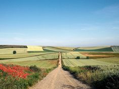 Picture of pilgrims on a trail across the Meseta, central Spain