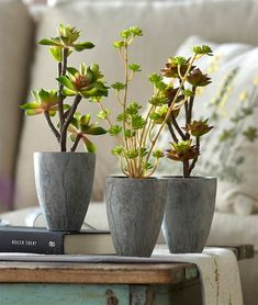 This set of three succulent plants come in a variety of textures and heights. Each plant comes in a matching grey cement pot. These plants are certain to give any room that perfect modern touch!