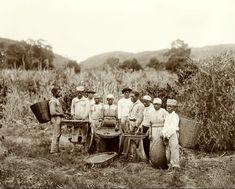 Escravos numa plantação de café - Marc Ferrez, c. 1882
