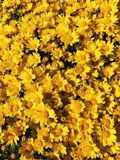 yellow aesthetic shared by Artemis Granger on We Heart It Yellow Things yellow aesthetic Yellow Aesthetic Pastel, Rainbow Aesthetic, Aesthetic Colors, Flower Aesthetic, Aesthetic Shoes, Brown Aesthetic, Kpop Aesthetic, Fred Instagram, Disney Instagram