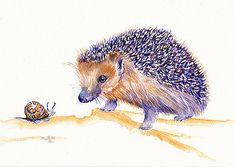 The Hedgehog and Snail by Debra Hall