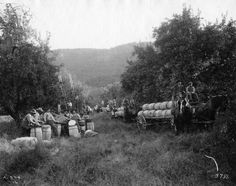 Apple picking, Appalachian Mountains, date unknown.