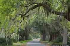 HuffPo: 25 Reasons You Must Visit Charleston, SC Immediately