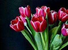 * Sweet tulips *