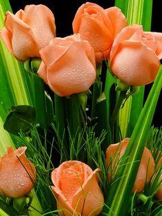 """""""toda a mulher gosta de rosas, de rosas, de rosas""""..."""