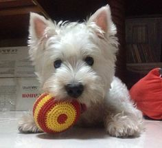 The Terrier Club - BEST OF SHOW Photo Contest - Ollie