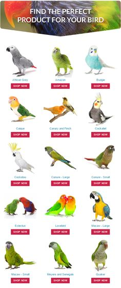 Find the perfect product for your pet #parrot by shopping at #ParrotEssentials using our shop by #bird type function.
