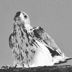 The beauty of nature,  you can't get enough of it. #birding #birdsphotos #birdphotographs #wildlifephotography #wilds #travel #kenyasafari #kenyaholiday #naturelovers  #safaris #travel #nature_lovers #photosafari