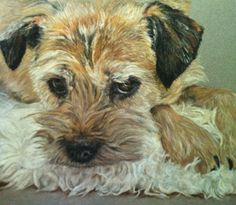 A pastel painting of Lucie the Border Terrier.