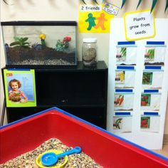 Science center~What is a plant? (plants grow frm seeds, plants help us, the care & needs of a plants &/or living/nonliving. Bird seed in sensory table. Terrarium with succulents & Dino friends that the kids help make & water/spray with water.  Seed board (the top of the sensory table leaning up right on wall ;)) to visually see & feel the different size/color/texture of seeds.