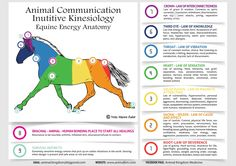 chakras of the horse - Buscar con Google