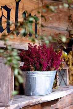 tin pail for planting