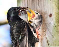 Beautiful Bird bring meal for kids