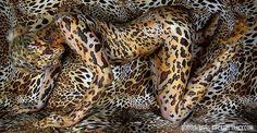 Body as Cheetah.
