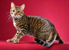 siap asih yang gak suka sama kucing, hewan yang satu ini emang bener ngegemesin dehhh, Rosullulloh saw juga sangat mengistimewakan hewan yang satu ini. nah bagi sahabat yang sayang dan mau memlihara kucing simak infomasi di bawah ini, siapa tahu bisa bermanfaat :)
