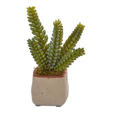 Each placed in its own decorative planter, this group of mixed artificial succulent plants comes in a set of four. The set features four thick, realistic succulent plants that are green with a slight tint of yellow to them for added realism. Use them together for a complete arrangement no matter where they're placed. You can use them together in a cluster, or you could scatter them throughout your room for touches of desert glam. Indoor Cactus, Cactus Plants, Garden Plants, Indoor Plants, Succulent Plants, Artificial Cactus, Artificial Succulents, Planting Succulents, Black Planters