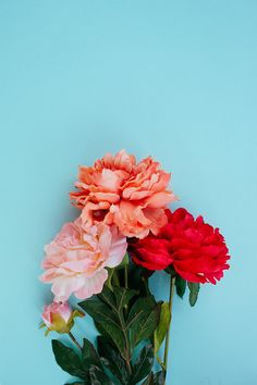 Sunday Bouquet: Peonies against Blue by Kayla Snell                                                                                                                                                                                 More