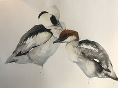 New works available to purchase by Karl Martens ahead of his talk at our Hungerford gallery on 12/09/2017. Discover more and to register your interest in the event via link in image. Karl Martens Smew Male and Female Unframed (Hungerford Gallery) Signed Watercolour on Handmade Paper 29 x 41 in 73.7 x 104.1 cms (KaM085)