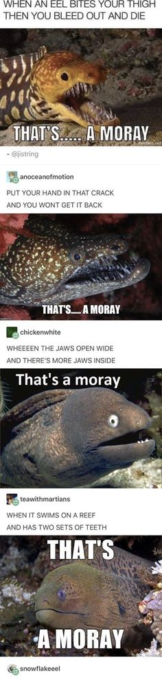Post with 4467 votes and 145601 views. Tagged with funny, meme, lol, sealife, dank memes; Kept me chuckling all morning ? Stupid Funny, Funny Cute, Funny Texts, The Funny, Funny Jokes, Funny Stuff, Random Stuff, Funny Drunk, Drunk Texts