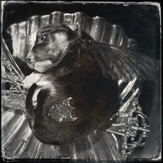 Puppy . Julia deVille Degustation at NGV #melbournenow   Flickr - Photo Sharing!