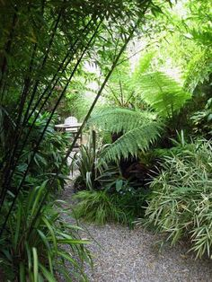 Small Jungle garden: Nicola Stoken Tomkins My garden is, like my house, tiny. Being an inner-city garden it is also overlooked (which I Will never get used to) and as I have an energetic toddler, cur