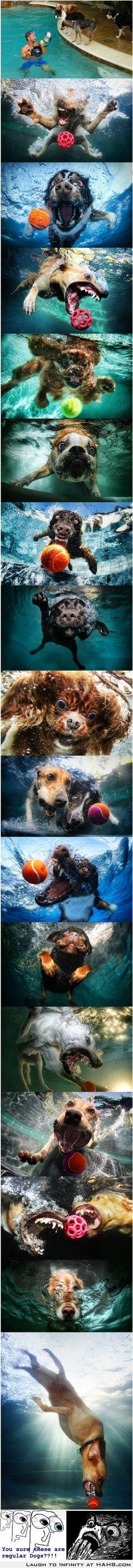 Dogs gone Wild!