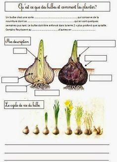 Education Joyeuse*: Les végétaux : cartes de nomenclature