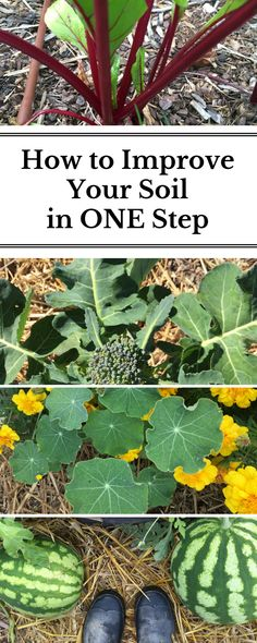 A super easy solution to improve the health of your soil.