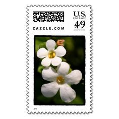 Two Tiny white flowers Photograph postage stamp; cutest little flowers ever, actually a ground cover! Tiny White Flowers, Little Flowers, Custom Postage Stamps, Self Inking Stamps, Photograph, Stationery, Cover, Photography, Paper Mill