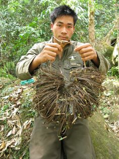 A member of a patrol team holds wire snares collected in saola habitat, in central Laos, 2009. Although saola aren't directly targeted, they are often caught in traps meant for other animals, causing devastating declines for a critically endangered species.