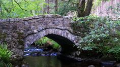 #PullabrookWood, part of the #BoveyValleyWoods in #Devon. #Bovey #BoveyValley