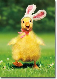 Duckling-Bunny-Funny-Easter-Card-Greeting-Card-by-Avanti-Press