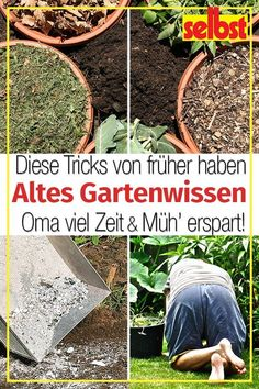 Diese Gärtnertipps hätte ich zum Saisonstart gut gebraucht: Wie Dir altes Gär… I would have used these gardening tips well at the start of the season: How Old Gardener Latin helps you to do less work in fertilizing & weeding! Garden Types, Garden Care, Gardening For Beginners, Gardening Tips, Gardening Supplies, Balcony Gardening, Gardening Services, Gardening Books, Indoor Gardening