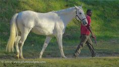 White Horse   Camera club    www.photojudges.com Racing, Horses, Club, My Style, Photography, Animals, Running, Photograph, Animales